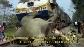Tunisia Daily - La planète terre se meurt, comment l'être humain détruit la planète !