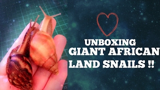 ☆ [PET GALS] UNBOXING my new GIANT AFRICAN LAND SNAILS !!