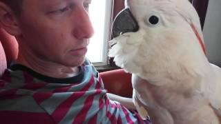 Conversation With A Dirty Bird