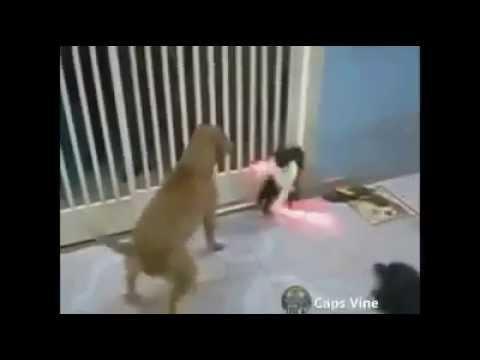 kedinin intikamı