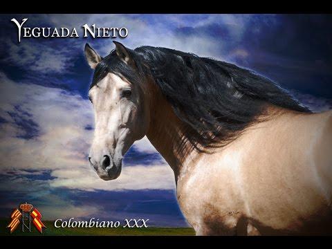 colombiano caballo español bayo en venta