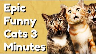 Epic Funny Cats 3 Minutes