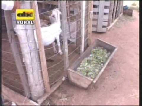 Instalaciones rústicas para cría de cabras
