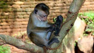 Funny and Cute Monkeys in Sri Lanka - Monkeys Stealing Banana