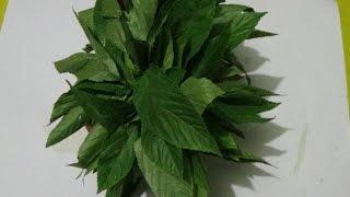 পাট শাঁকের জটিল ৭ টি সাস্থ্য উপকারিতা জেনে নিন। Health Benefits of Vegetable.
