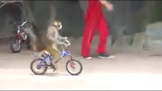 Lucu moyet pandai naik basikal