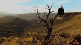 Onde Só as Águias Voam | Where Eagles Dare | Ir. Dário e Congregação | Zoe Edições
