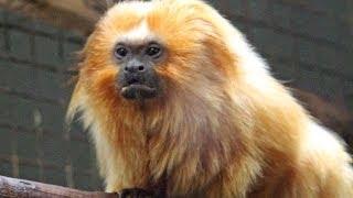 Smithsonian National Zoo - Washington, D.C. -  CRAZY ANIMALS! 🐵