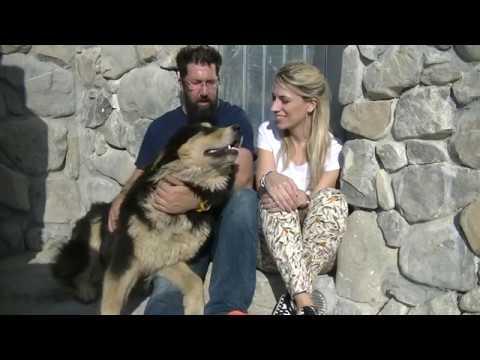 11 Il cane da pastore della Sila cane da capre di Calabria versione in italiano