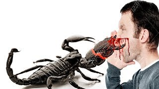 Top 10 Most Dangerous Scorpions of the world !!