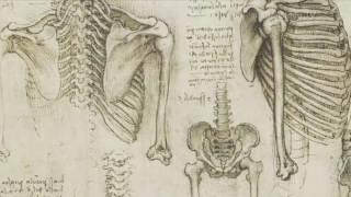 Decenas de dibujos de Leonardo Da Vinci disponibles en internet