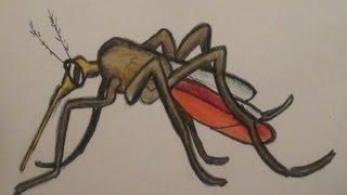 كيف تقضي على البعوض ?