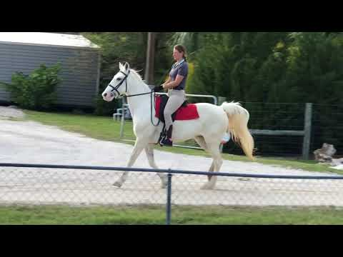 Xxx Mp4 Glimmer 14 Y O Tennessee Walker For Sale 3gp Sex