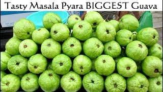 Tasty Masala Pyara ( BIGGEST Guava ) & Cucumber - Indian Street Food - Street Food India