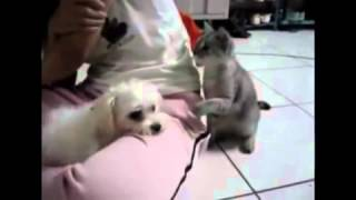 just for laugh cat and dog talk in hindi