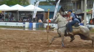 Provas Cavalo Arabe Expointer 2016