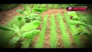 Single, Double and Multiple Cropping in Agriculture