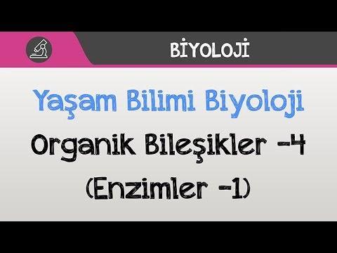 Yaşam Bilimi Biyoloji - Organik Bileşikler -4 (Enzimler -1)