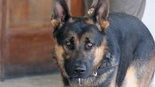 Fallen K-9 cop honored by hundreds