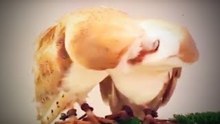 Funny Pets 😍 Cute Cats, Dogs and Other Pets  (Part 1) [Funny Pets]