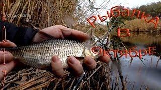 рыбалка на удочку кого на что ловить и когда сезон