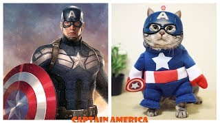 Famous Characters in Real Life Cats