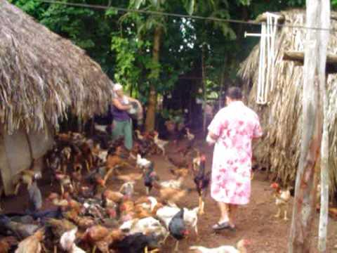galinhas sitio sao jorge