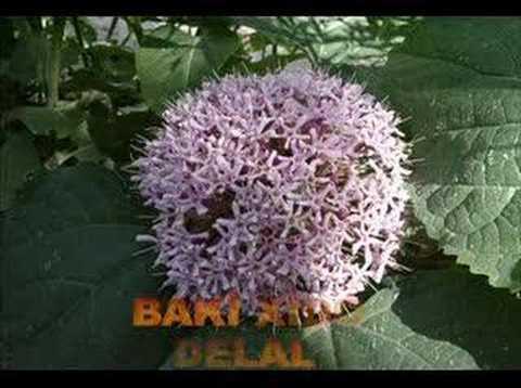 Baki Xido