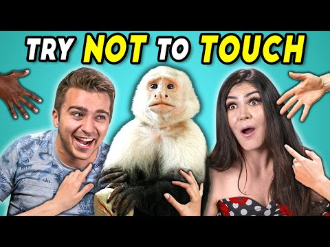 Try Not To Touch Challenge 7