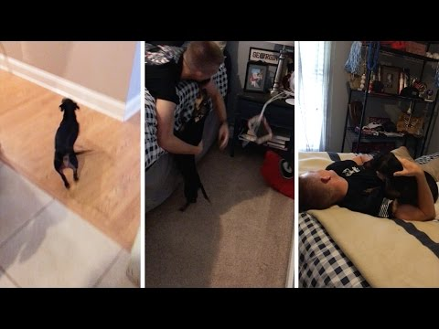 Soldier Reunited With Dog After Six Months