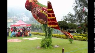 ooty flower show 2016 - Book cheapes festival