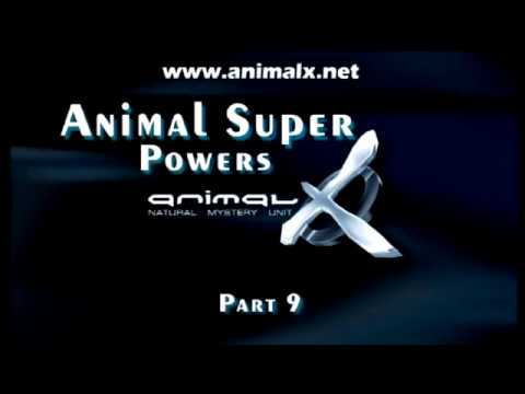 Part 9 Animal Super Powers - Animal X Natural Mystery Unit | Storyteller Media