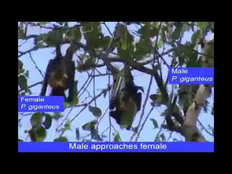Xxx Mp4 Bats Perform Oral Sex Video 3gp Sex
