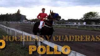 POLLO - 07-05-17 - MARGARITA - M&C