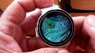 Questions Answered: Pinch & Zoom on Android Smartwatches