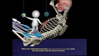 The Proper Technique for a Sit-Up: 3D Animation of Muscles in Motion
