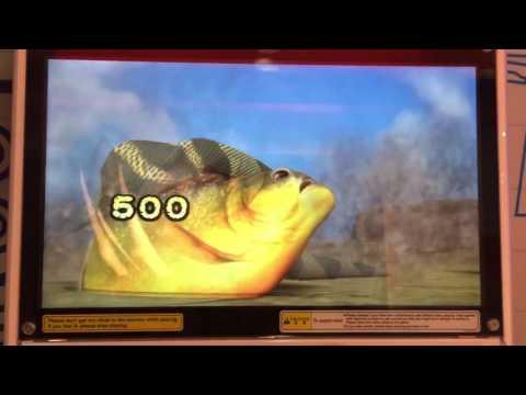 Piranha in action