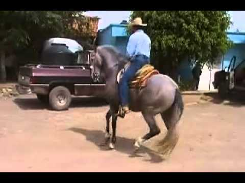 El Zafiro Caballo Bailador.