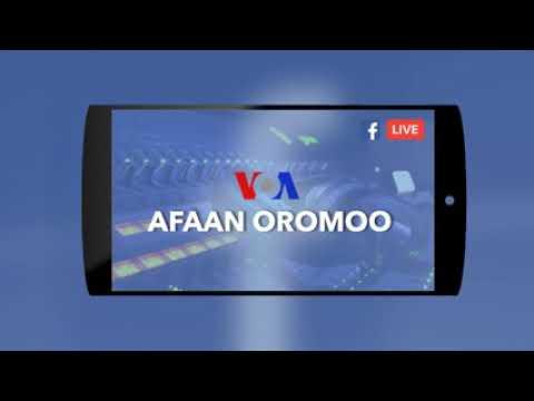Xxx Mp4 VOA Afaan Oromoo January 2 2019 3gp Sex