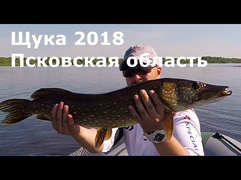 Рыбалка на щуку в пскове
