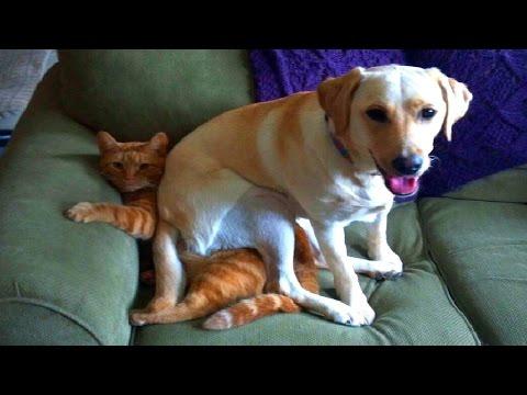 Perros sentados encima de gatos 2015 HD Recopilación Gatos y perros chistosos
