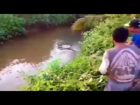 Xxx Mp4 HARUS TONTON VIDEO VIRAL DI INDONESIA 2017 3gp Sex