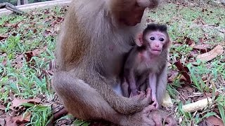 Newborn baby monkey with young mother - Episode 02