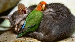 15 Amazing Animal Friendships You Won