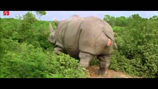 Mother Rhino is Giving Birth (Ace Ventura)