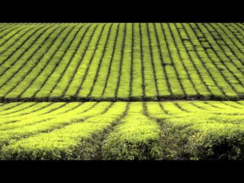 Background Music Instrumentals Two Hours New Age Slow Music