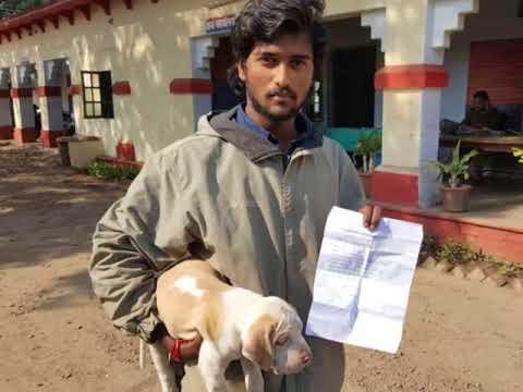 ट्रेन में बिना टिकट सफर कर रहा था कुत्ता, रेलवे ने ठोका 2250 का जुर्मानाDog traveling without ticket
