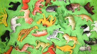 Animals learn for kids | Kids at the ZOO, BEST Educational video for Kids, Toddler, Children