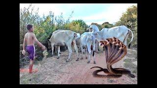 Woow !! ভয়ানক সাহসী ছেলে জল ধরার সাপ - কিভাবে সহজ ডিপ হোল গ্রাম সাঁতারের ফাঁদ করা সহজnull