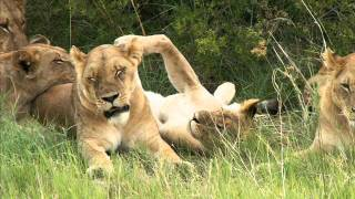 John Barry Theme Out of Africa